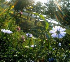 Wild Blooms and Sun Rays by zomberinacontagion