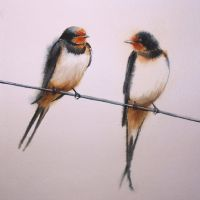 barn swallows by jennomat