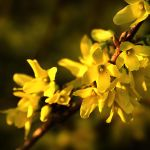 Touch of Yellow by MarcoHeisler