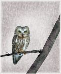 Owl on branch by kaidoh