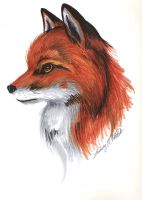 Red Fox by ellana