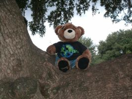 Bear on tree. by Neoguest