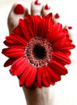 red gerbera and red nails by ReisLie