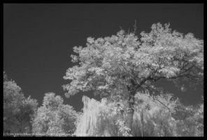 Tree (infrared) - 6 by imagethoughts