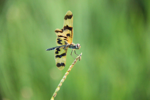 Dragonfly rests on grass by themuteprotagonist