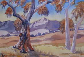 Flinders Ranges Red Gum Tree - Watercolour by Katsenia