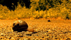 Snails by KayleighOC