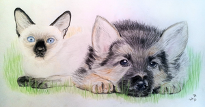 Dog and Cat by sophicardia