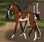 Aspens foal - ADOPTED by Pine-Hollow-Ranch