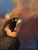 Peregrine Portrait by Nambroth