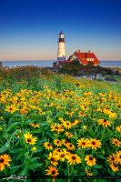 Portland-Maine-Lighthouse-with-Flower by CaptainKimo