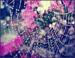 Sarah's web by Whimsical-Dreams