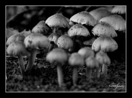 Mushrooms by ricardsan