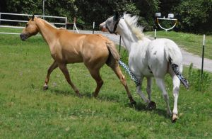 Marshmallow and Belle stock 5 by Feather-Stock
