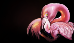 Flamingo by Lahvorre