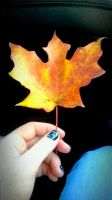 the leaf of fall by wantedredfox