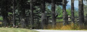 A Family of Turkeys - and a Cr by sha-shajewelry