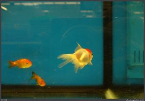 Fish Stock 0034 by phantompanther-stock