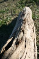 wood, rust, grass by Dom410