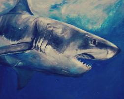 The great white shark by ahsr