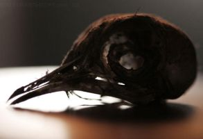 Bird Skull Profile by Aleuranthropy
