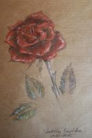 Rose soft pastels by Laureina