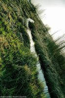 Grass and Water by dimiirreparable