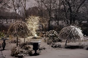 Garden on December 23rd by PaulMcKinnon