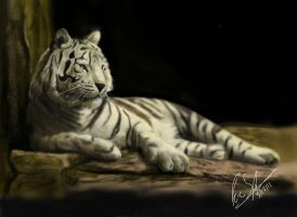 White Bengal Tiger by franeres