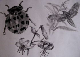 Ladybird, moth and flowers by haloanime97