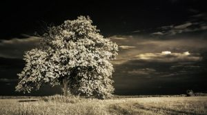 The white tree by jeremi12