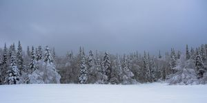 Frosty Fir Forest by forseti-the-gray