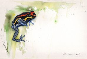 Frog for Sarah by emmawood