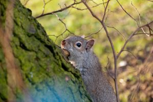 Squirrel by Rodimus80
