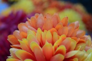 Colorful Flowers (fake) by tlbauder1987