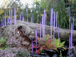 Purple Spiked Glass - Dale Chihuly by Sing-Down-The-Moon