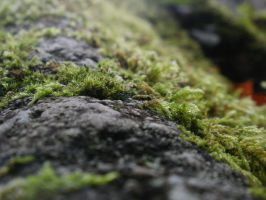 Mossy Mountain 4 by DeadHeadStock