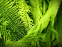 where the fern grows by dcdc2424