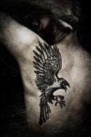 The Raven, pro-photo by Meatshop-Tattoo