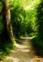 Foresta by sannamy