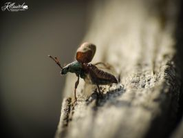 Green bug 2 by killswitch90