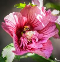 Bee in the Center by mjohanson