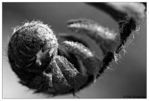 Ferl BW by butterfly36rs