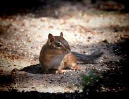 Chippy 10-10-10 by Tailgun2009
