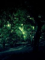 Enchanted Grove by SVProductions