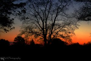 Valley Forge Sunrise 11-15, 1 by Whurrledpeas