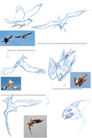 Gryphon flight Sketches by ObloquyCondemed