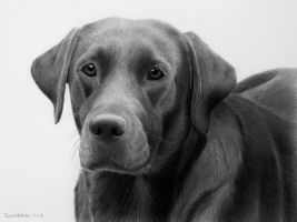 'Blue' dog portrait by SarahEsen