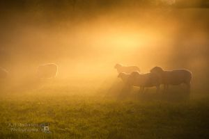 -Sunday Morning- by BHandersen