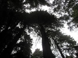 Muir Woods 3 by your-mom--burn